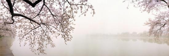 Cherry Blossoms at the Lakeside, Washington DC, USA--Photographic Print