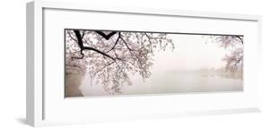 Cherry Blossoms at the Lakeside, Washington DC, USA