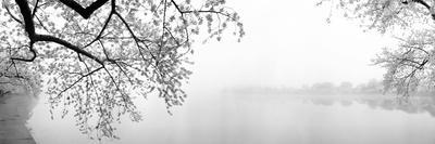 https://imgc.artprintimages.com/img/print/cherry-blossoms-at-the-lakeside-washington-dc-usa_u-l-pxmums0.jpg?p=0