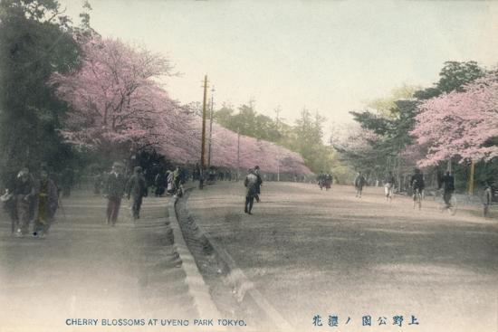 'Cherry Blossoms At Uyeno Park Tokyo', c1910-Unknown-Giclee Print