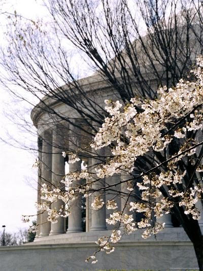 Cherry Blossoms Frame the Jefferson Memorial-Rex Stucky-Photographic Print