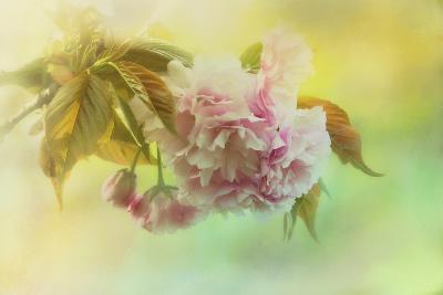 Cherry Blossoms in Spring-Jai Johnson-Giclee Print