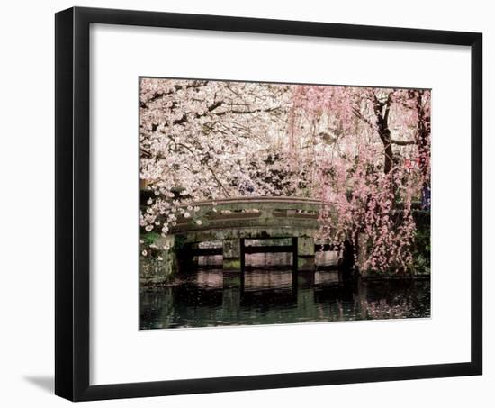 Cherry Blossoms, Mishima Taisha Shrine, Shizuoka--Framed Photographic Print