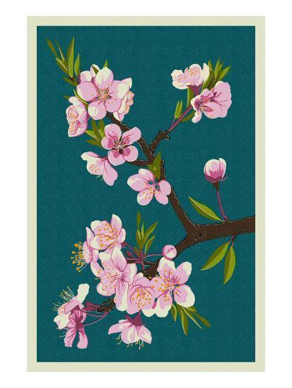 Cherry Blossoms-Lantern Press-Art Print