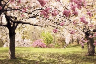 Cherry Hill Morning-Jessica Jenney-Giclee Print