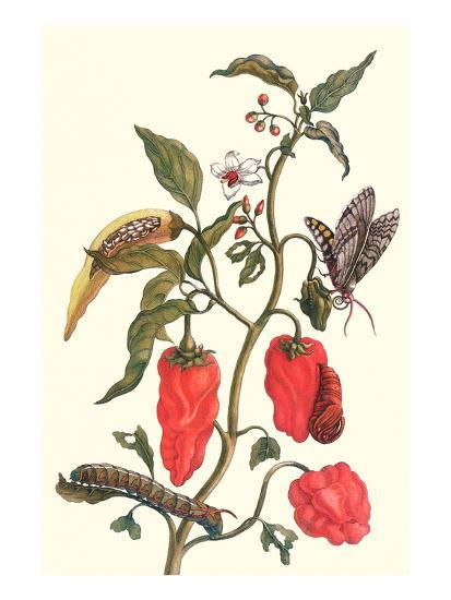 Cherry Pepper and Tobacco Hornworm with Five Spotted Hawkmoth-Maria Sibylla Merian-Art Print