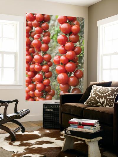 Cherry Tomatoes, Sorrento, Campania, Italy-Walter Bibikow-Wall Mural