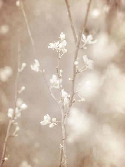 Cherry Tree Blossom, Abstract Soft Color Floral Background-Anna Omelchenko-Art Print