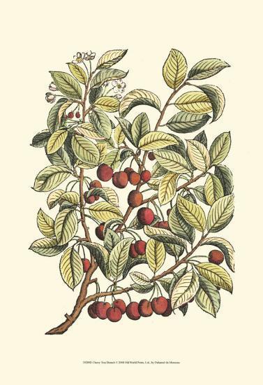 Cherry Tree Branch-Henri Du Monceau-Art Print