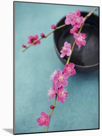 Cherry Tree Branch-Amelie Vuillon-Mounted Art Print