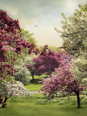 https://imgc.artprintimages.com/img/print/cherry-tree-grove_u-l-pymdiw0.jpg?p=0