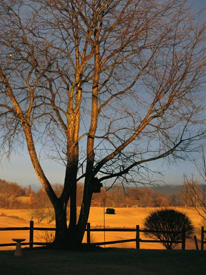 Cherry Tree in Waynesboro, Pennsylvania-Raymond Gehman-Photographic Print
