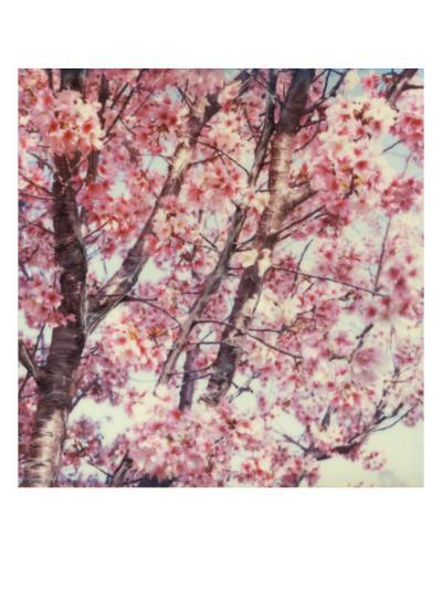 Cherry Tree-Claire Rydell-Giclee Print
