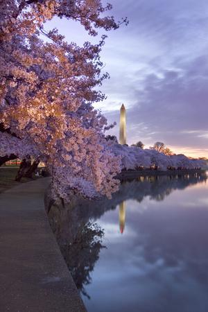 Cherry Trees in Bloom, and the Washington Monument at Twilight-Irene Owsley-Photographic Print