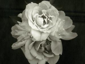 Close of Blossom Flower by Cheryl Clegg