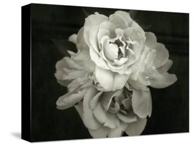 Close of Blossom Flower