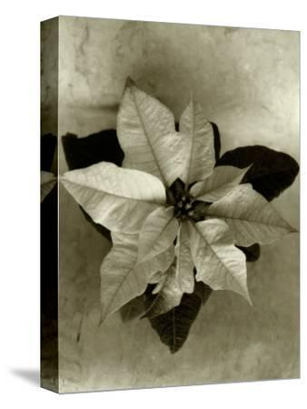 Top View of Plant, Sepia Tone
