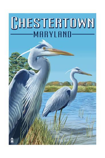 Chestertown, Maryland - Blue Herons in Marsh-Lantern Press-Art Print