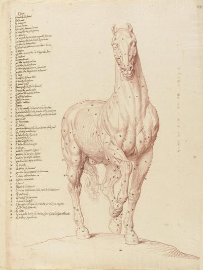 Cheval écorché, debout, la tête vue de face-Edme Bouchardon-Giclee Print