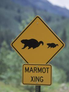 Marmot Crossing Sign, Aspen, CO by Cheyenne Rouse