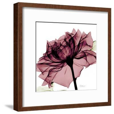 Chianti Rose-Albert Koetsier-Framed Art Print