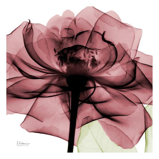 Chianti Rose-Albert Koetsier-Art Print