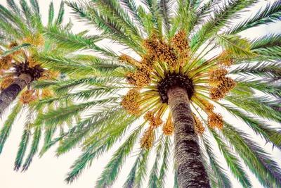 https://imgc.artprintimages.com/img/print/chic-palms-i_u-l-q11gmcm0.jpg?p=0