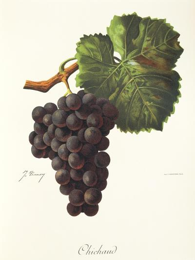 Chichaud Grape-J. Troncy-Giclee Print