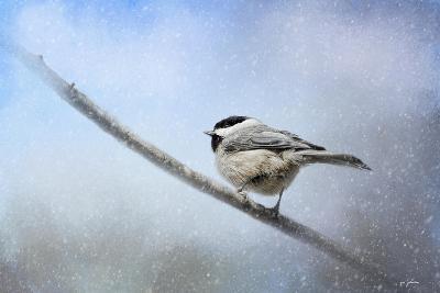 Chickadee in the Snow-Jai Johnson-Giclee Print