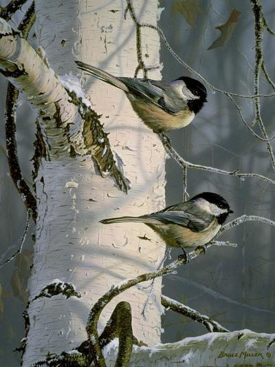 Chickadees at Dawn-Bruce Miller-Giclee Print