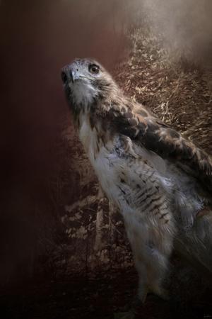 https://imgc.artprintimages.com/img/print/chickasaw-redtail_u-l-q12up1r0.jpg?p=0