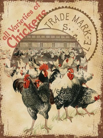 Chicken Varieties--Giclee Print