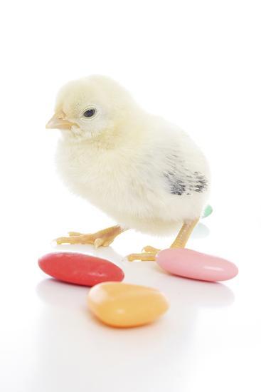 Chicks 009-Andrea Mascitti-Photographic Print