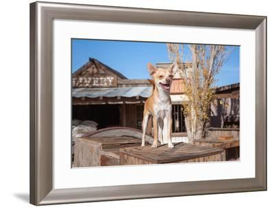 Chihuahua Standing on Wooden Boxes-Zandria Muench Beraldo-Framed Photographic Print