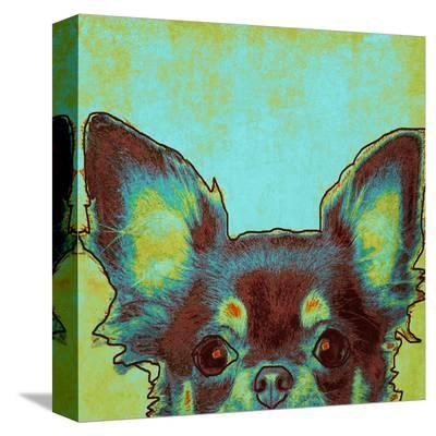Chihuahua--Stretched Canvas Print