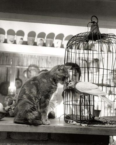 Child, Cat and Dove-Robert Doisneau-Art Print