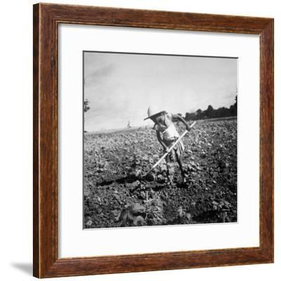 Child of Black Tenant Farmer Family Using Hoe While Working in Cotton Field-Dorothea Lange-Framed Premium Photographic Print
