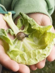 Child's Hands Holding Cabbage Leaf with Snail
