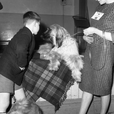 Child with an Afghan Hound at a Dog Show in Horden, County Durham, 1963-Michael Walters-Photographic Print