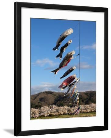 Children'S' Day Flying Fish over River, Kitakami River, Kitakami, Iwate Prefecture, Japan--Framed Photographic Print