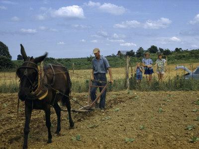 https://imgc.artprintimages.com/img/print/children-watch-a-farmer-and-his-mule-cultivate-a-tobacco-field_u-l-p8jjjg0.jpg?p=0