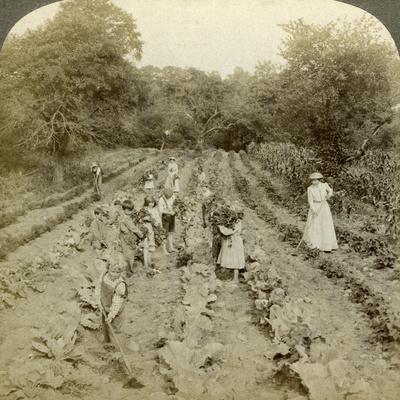 Children Working in a Vegetable Garden, Salvation Army Home, Spring Valley, New York, Usa-Underwood & Underwood-Framed Photographic Print