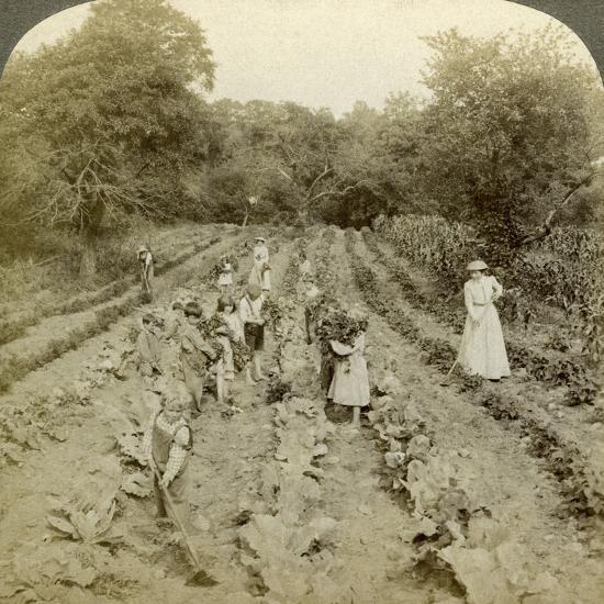 Children Working in a Vegetable Garden, Salvation Army Home, Spring Valley, New York, Usa-Underwood & Underwood-Photographic Print