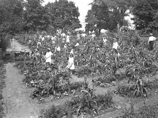 Children Working in the Isham Park School Garden, New York City, August 16, 1915-William Davis Hassler-Photographic Print