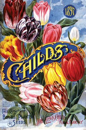 Childs Tulips Laruel Park NY