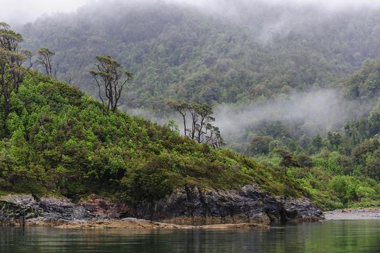 Chile, Patagonia, Lake District, Pumalin National Park. Valdivian rainforest-Fredrik Norrsell-Premium Photographic Print