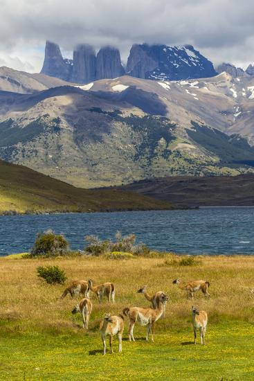 Chile, Patagonia, Torres del Paine NP. Mountains and Guanacos-Cathy & Gordon Illg-Photographic Print