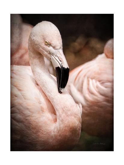 Chilean Flamingo II-Debra Van Swearingen-Art Print