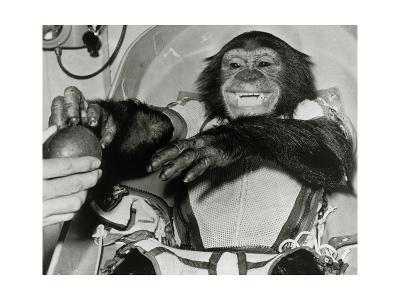 Chimp Ham After Mercury MR2 Flight--Giclee Print