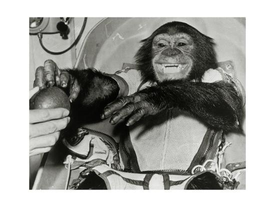 Chimp Ham After Mercury MR2 Flight--Giclee Print